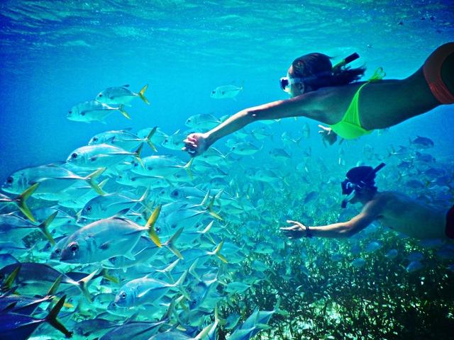 Snorkeling 650 with School of Fish 2 Chabil Mar Belize Resort