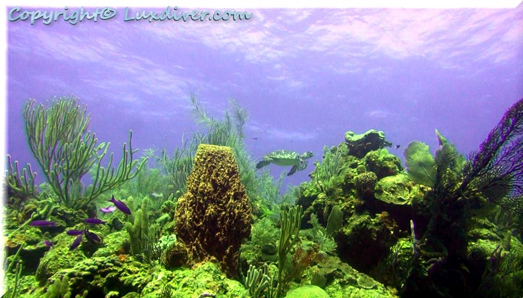 Turtle1 Chabil Mar Resort Belize