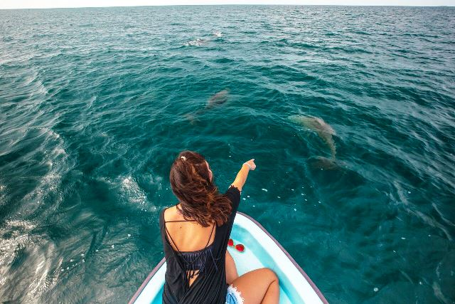 Dolphins 650 from Panga Chabil Mar Resort Belize