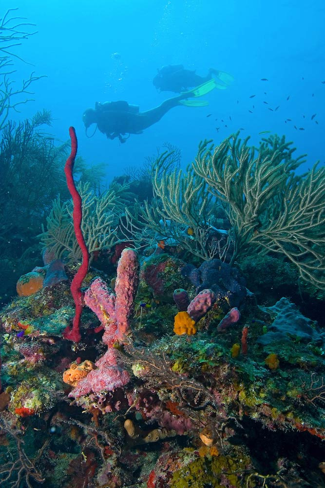 SCUBA Diving at Turneffe Atoll
