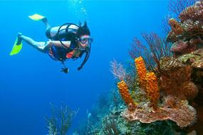 World Class dive