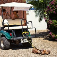 phoca thumb m olivera rusu at chabil mar belize resort honeymoon golf cart exit