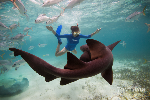 Snorkeling-or-Diving-the-Southern-Barrier-Reef-3