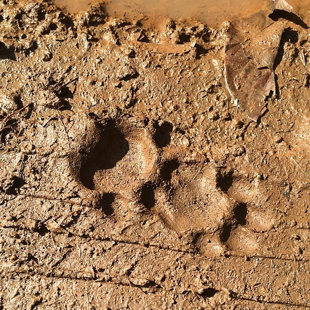 cockscomb-basin-wildlife-sanctuary-belize