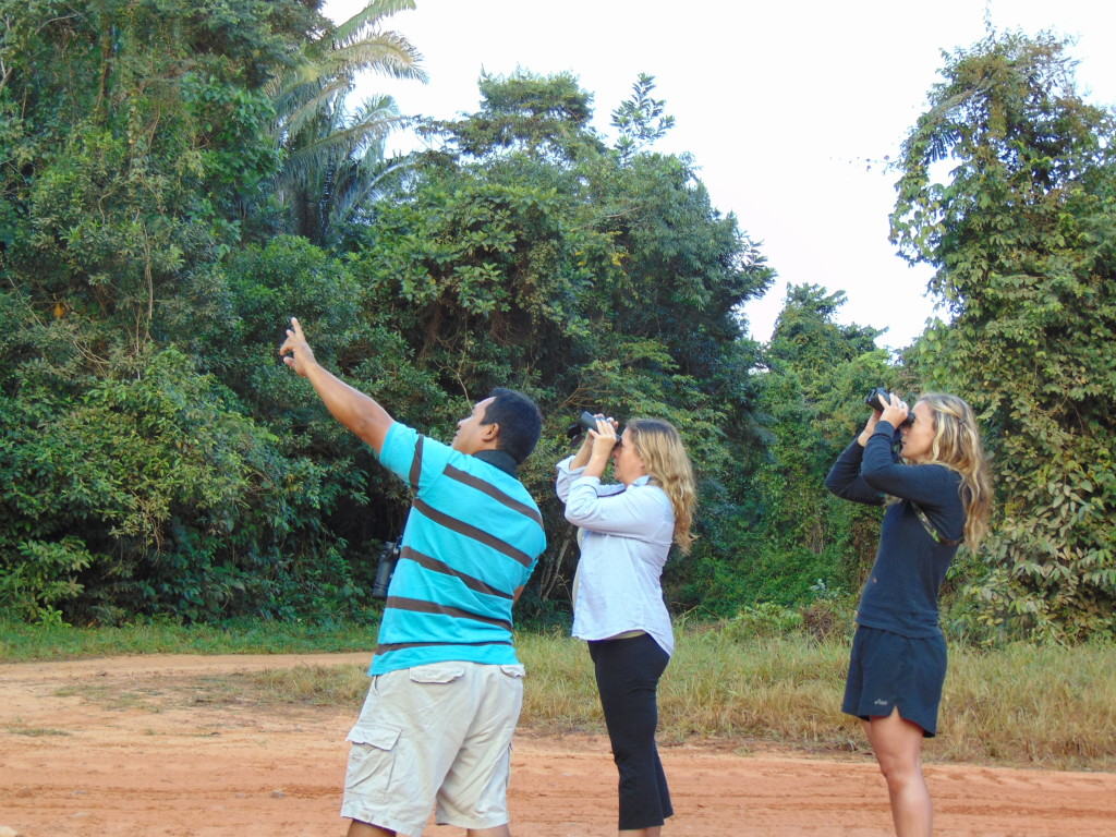 birding in Placencia Belize