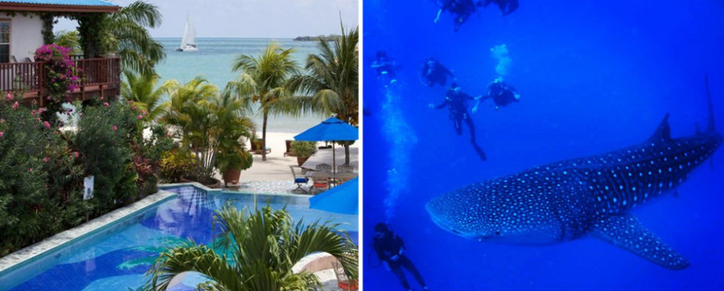 belize jungle and sea vacation package