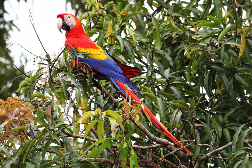 rp_birding-in-Belize-1024x683.jpg