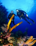 Dive the World's Second Largest Barrier Reef in Belize