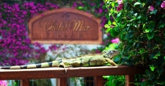 Exotic Belize - Love our Resident Iguanas, Birds & Geckos