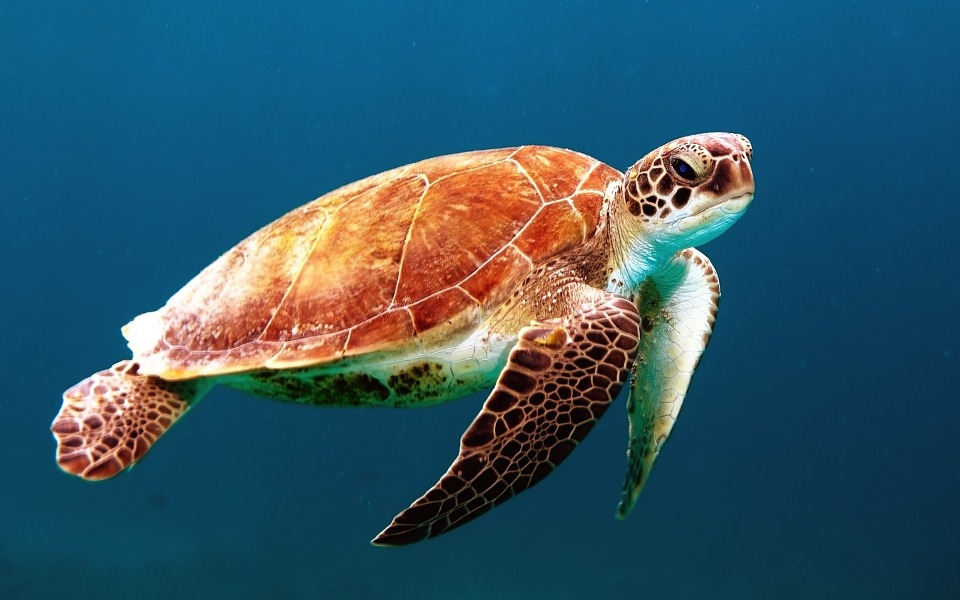 Belize Expands Efforts to Protect Marine Life