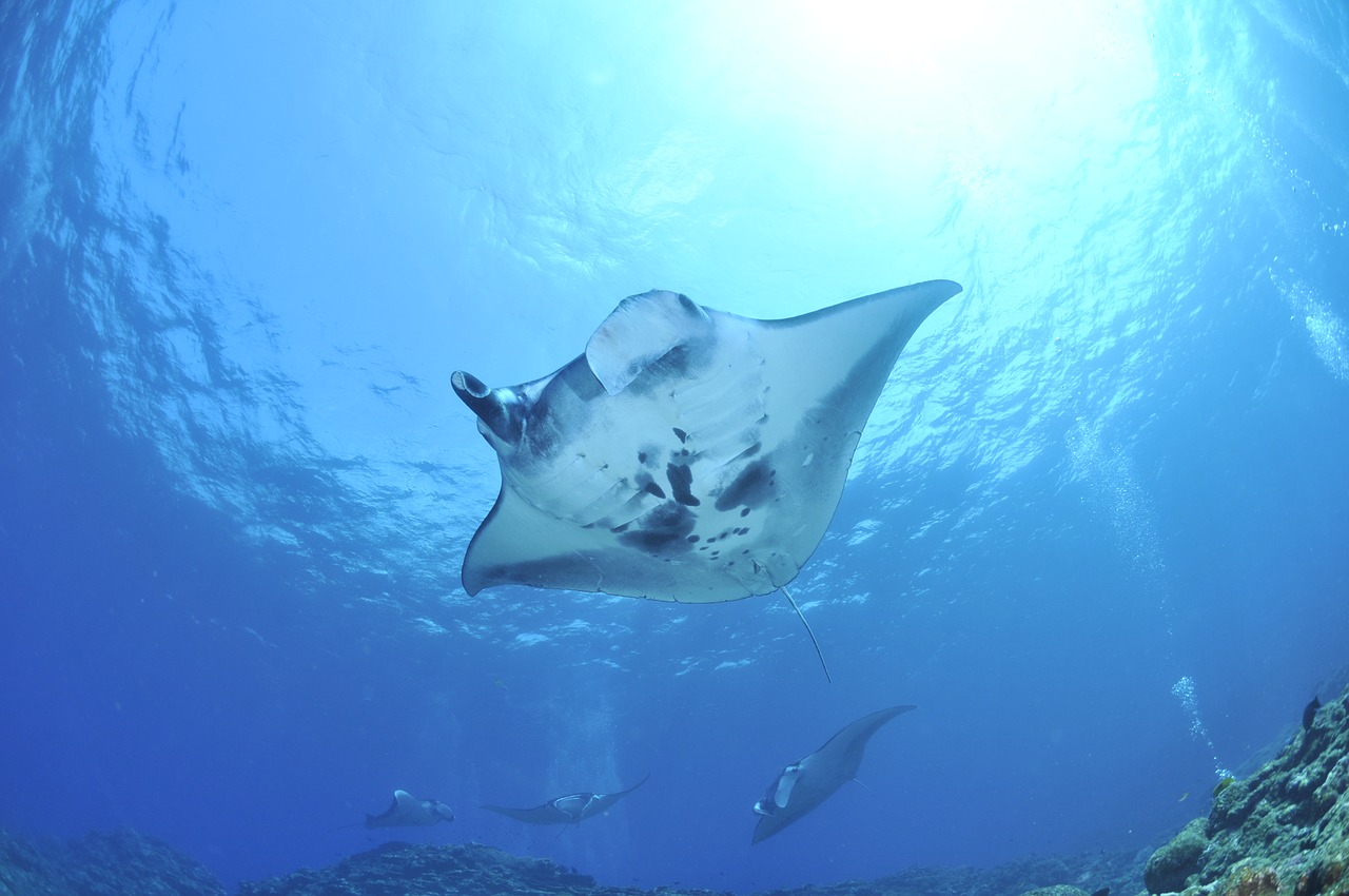 A Guide to What You Can See While Snorkeling in Belize