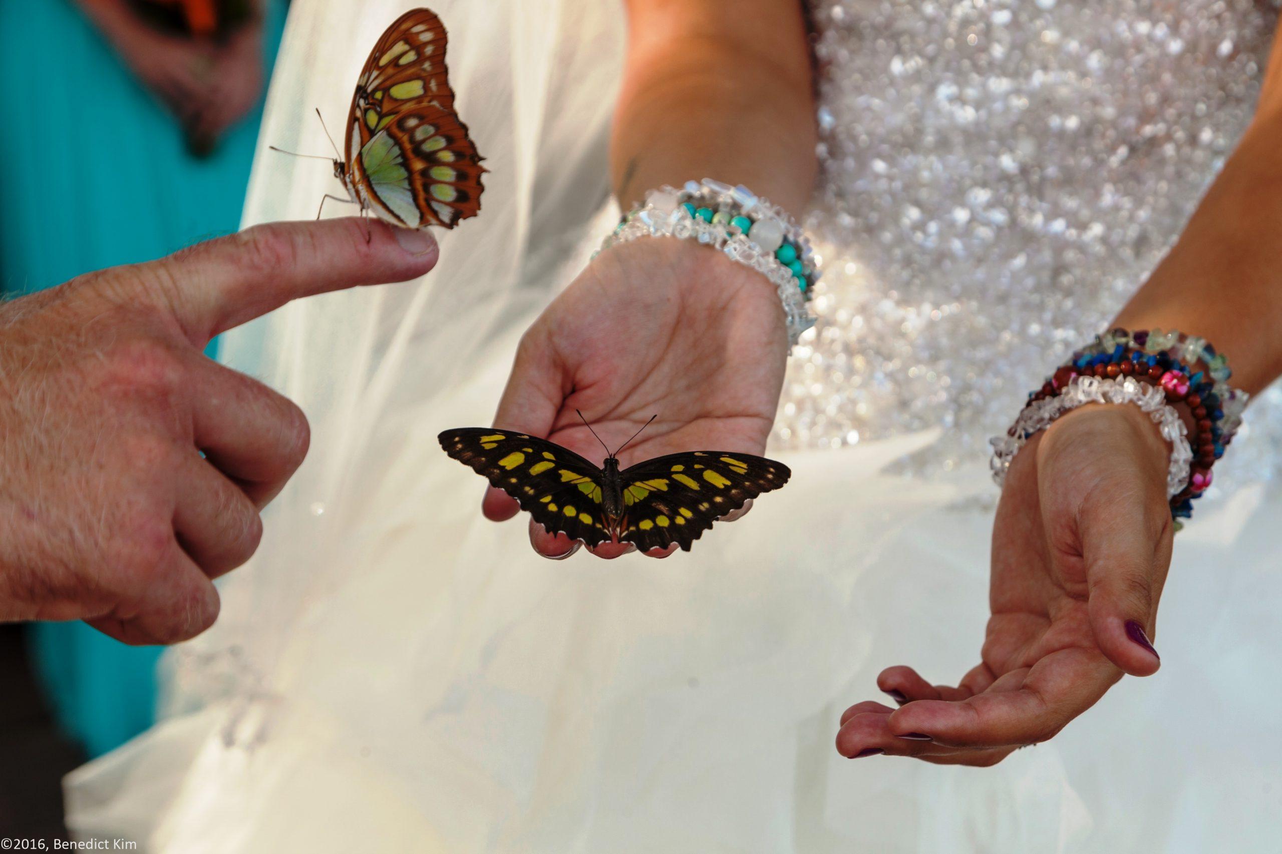 butterflies in belize