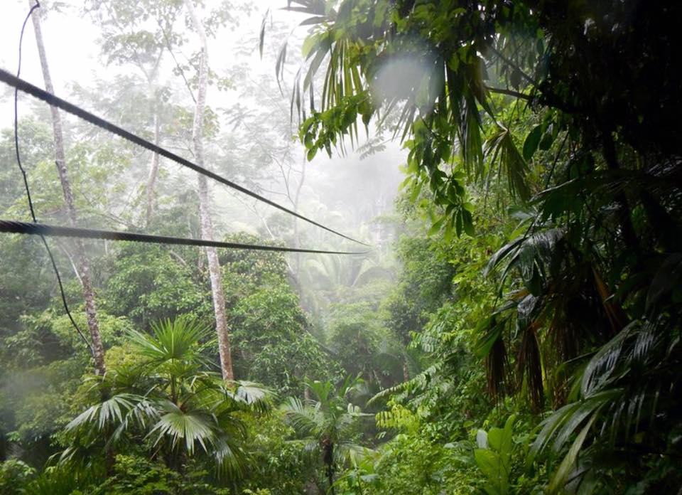 belize jungle activities