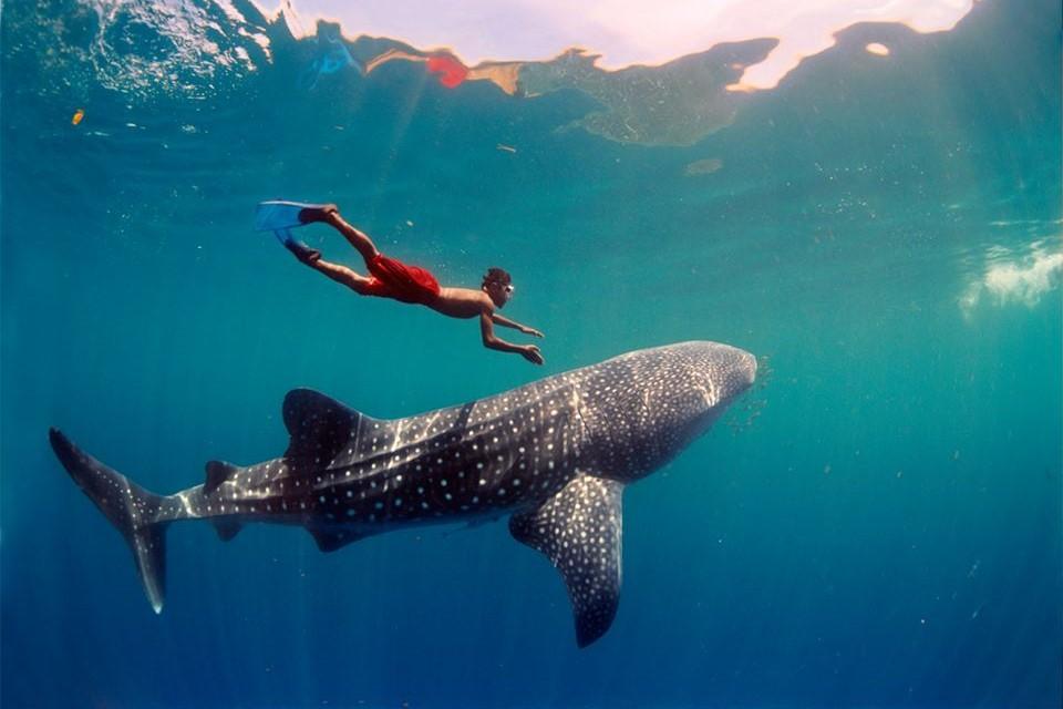 Whalesharks