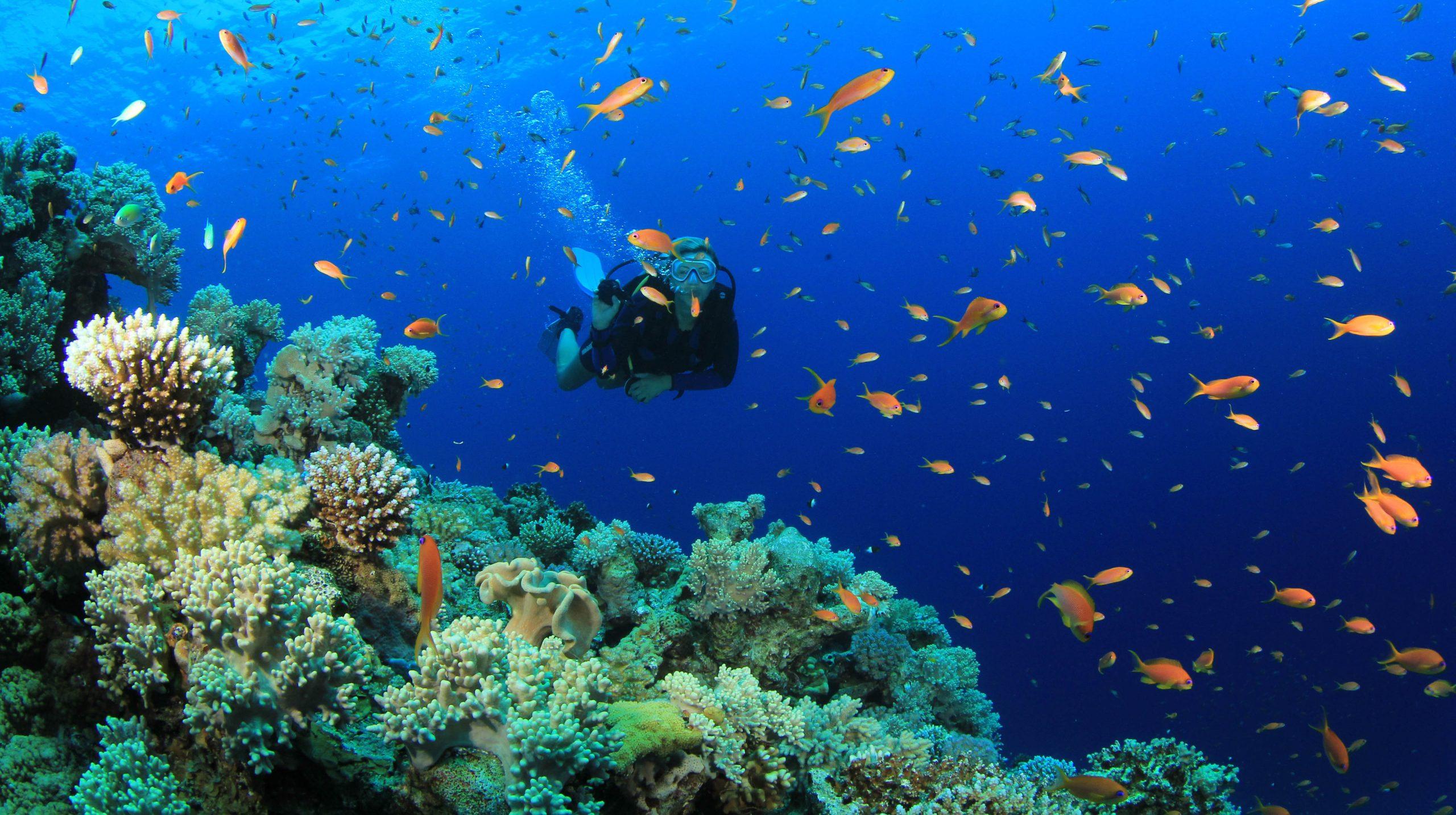 Belize Scuba Diving Trips